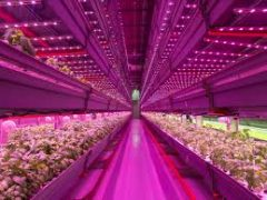Themabijeenkomst Indoor- en Vertical Farming: hype of reality?